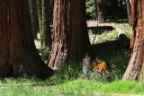 Yosemite and Surroundings