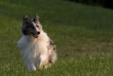 My dog Foggy :)