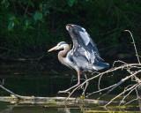 Visits to Critter Lake