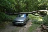 A Tree Falls On A Saab