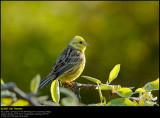 Bird Favourites