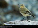 Garden & Forest Birds (updated:2008-10-22)