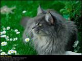 2011728 web.jpg