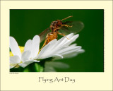 Flying Ant Day #3