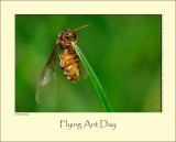 Flying Ant Day #4