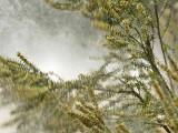 Cloud of Pollen