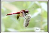 Bromont-papillons 022