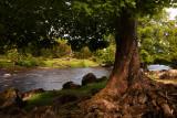River Ure Near Redmire