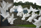 Doves at Ardchattan Priory