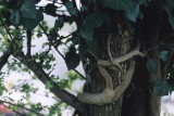 snake-woman around tree