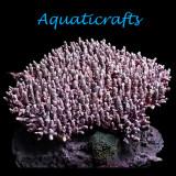 Aquaticrafts
