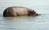 Let Sleeping Hippos Lie?