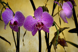 Purple Orchids with Lighting