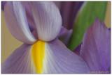 iris ~ 2
