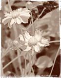 Greenway Flowers