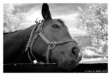 Horse Dreaming