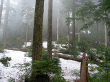 Mt. Baker/Snoqualmie N.F. - Ten Four Mountain