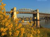 Burrard Bridge in Spring
