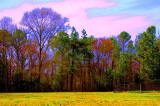 color merged ir.jpg
