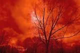 stormy sky tree_edited-1 copy.jpg
