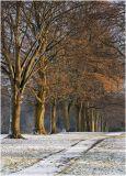 Golden Tree Line