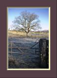 Gate, Wall & Tree