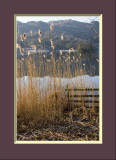 Reeds and fence