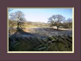 Rydal Frosty Treescape