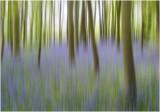4- Bluebell Woods