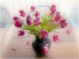 7- Tulips