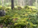 16 -Tanglewoods