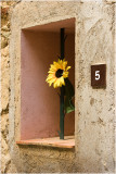 Sunflower at No 5