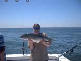 fish2_2007.jpg
