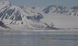 Polar Bear swimming OZ9W1409