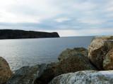 Redhead ~  Newfoundland