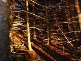 Copper Conifers