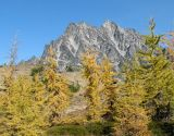 IMG_1523 Larches and Ingalls Peak.jpg