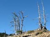 IMG_1535 Dead trees.jpg