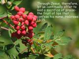 Hebrews 13 15.jpg