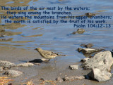 Psalm 104 12_13.jpg