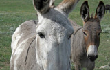 The Donkey Brigade