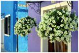 flowers_door
