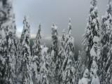 Wędrówka przez las(IMG_4340.jpg)