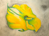 Yellow Calla Revisited