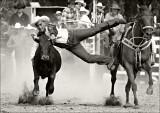 Kiwi Cowboys (and Girls)