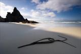 A Kelp flourish on Allen's Beach
