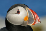 001  ATLANTIC PUFFIN