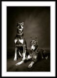 Salem and Tabitha