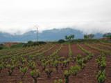 Vineyard in Navarrete