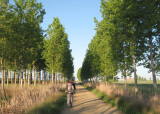 Tree lined walk to Fromista